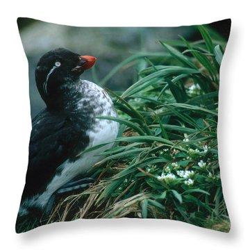 Parakeet Auklet Throw Pillow