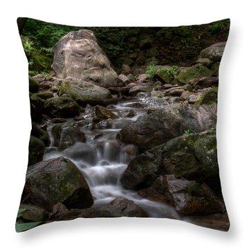 Parfrey's Glen Creek Throw Pillow