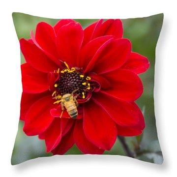 Park Beauty Throw Pillow