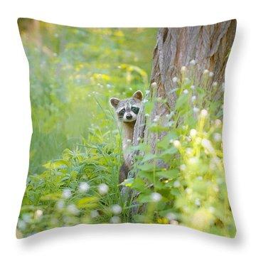 Raccoon Photographs Throw Pillows