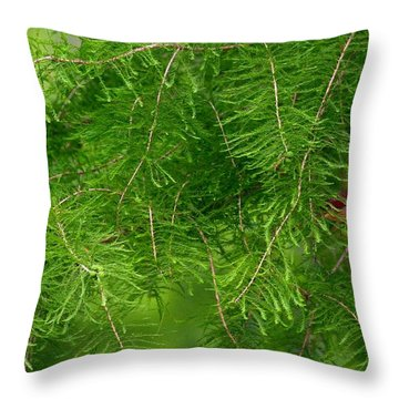 Throw Pillow featuring the photograph Peek A Boo by Elizabeth Winter