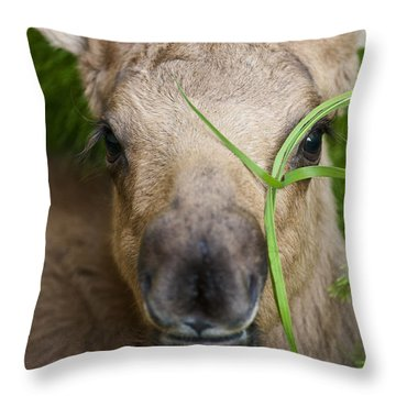Peek A Boo Throw Pillow by Ted Raynor