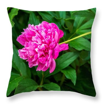 Peony Throw Pillow by Steve Harrington