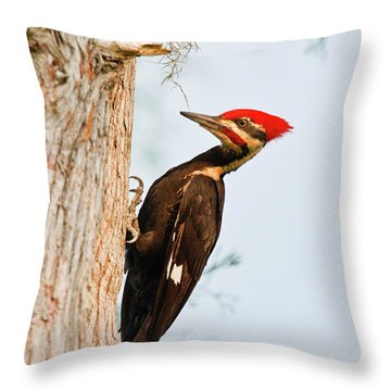 Pileated Woodpecker Throw Pillows