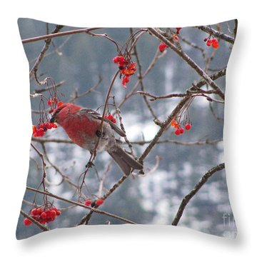Pine Grosbeak And Mountain Ash Throw Pillow