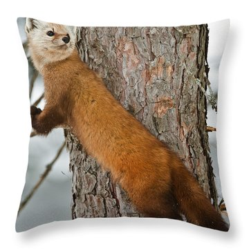 Pine Marten Throw Pillow