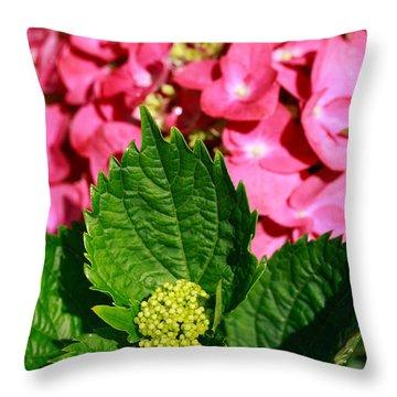 Pink Hydrangea Throw Pillow by Gaspar Avila