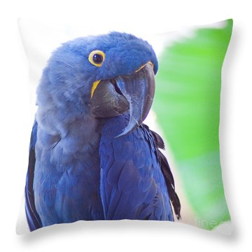 Throw Pillow featuring the photograph Posie by Roselynne Broussard