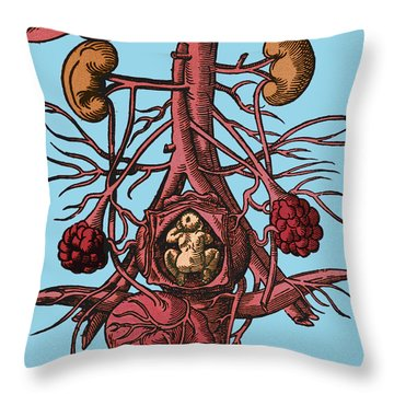Pregnancy 16th Century Artwork Throw Pillow by Science Source