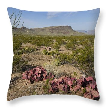 Prickly Pear In Chihuahuan Desert, Texas Throw Pillow
