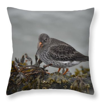 Purple Sandpiper Throw Pillow