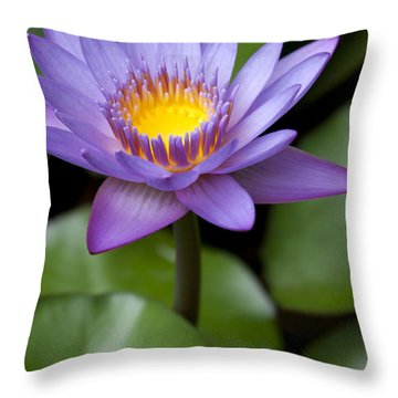 Radiance Throw Pillow by Sharon Mau