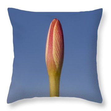 Rain-lily Bud Throw Pillow