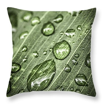 Raindrops On Green Leaf Throw Pillow by Elena Elisseeva