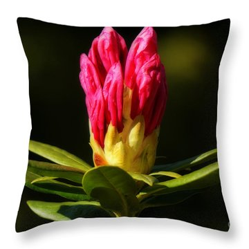 Throw Pillow featuring the photograph Ready by Inge Riis McDonald
