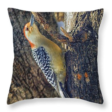 Throw Pillow featuring the photograph Red-bellied Woodpecker by Constantine Gregory