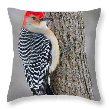 Red-bellied Woodpecker Throw Pillow by Timothy McIntyre