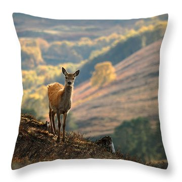Red Deer Calf Throw Pillow