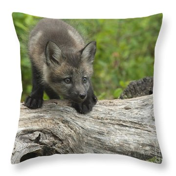 Red Fox Kit Throw Pillow by Sandra Bronstein