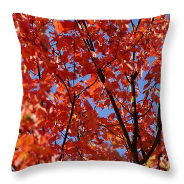 Red Leaves Of Autumn Throw Pillow by David Birchall