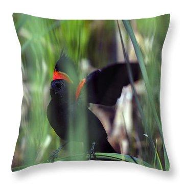 Red-winged Blackbird Throw Pillow by Steven Ralser
