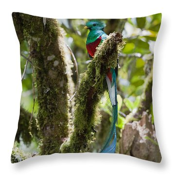 Throw Pillow featuring the photograph Resplendent Quetzal Male Costa Rica by Konrad Wothe