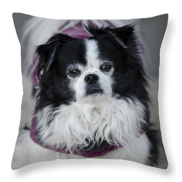 Romeo  Throw Pillow by Saija  Lehtonen