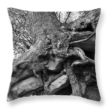 Roots Of Life Throw Pillow by David Lee Thompson