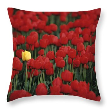 Rows Of Red Tulips With One Yellow Tulip Throw Pillow by Jim Corwin