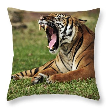 Check Out These Whites Throw Pillow