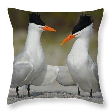 Royal Terns Throw Pillow by James Petersen