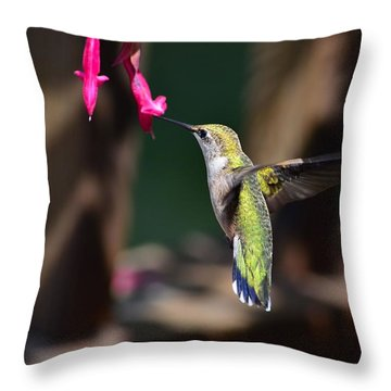 Ruby Throat Hummingbird Throw Pillow