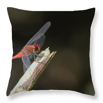 Throw Pillow featuring the photograph Ruddy Darter Dragonfly - Sympetrum Sanguineum by Jivko Nakev