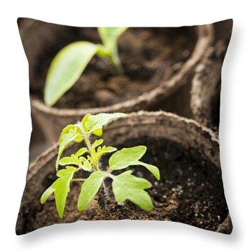 Seedlings  Throw Pillow by Elena Elisseeva