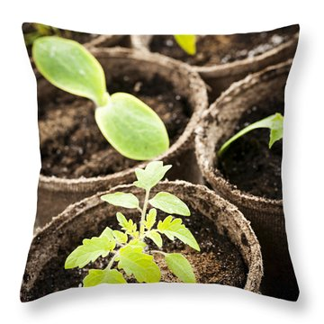 Seedlings Growing In Peat Moss Pots Throw Pillow by Elena Elisseeva
