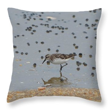 Throw Pillow featuring the photograph Semipalmated Sandpiper by James Petersen