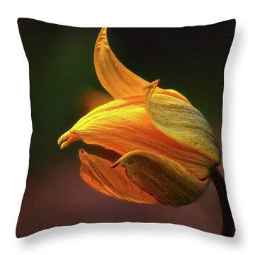 Shine Throw Pillows