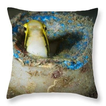 Short-head Sabretooth Blenny Peering Throw Pillow by Steve Jones