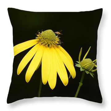 Simple Things Throw Pillow by Randy Bodkins