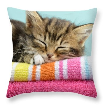 Sleepy Kitten Throw Pillow by Greg Cuddiford