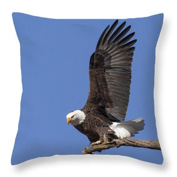 Smooth Landing 3 Throw Pillow by David Lester