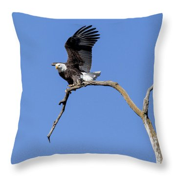 Smooth Landing 4 Throw Pillow by David Lester