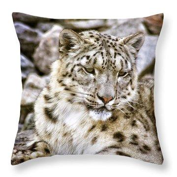 Snow Leopard Throw Pillow by Daniel Precht