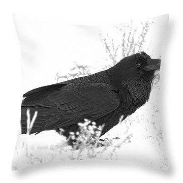Snow Raven Throw Pillow