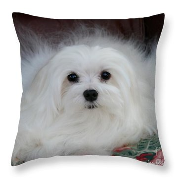 Snowdrop The Maltese Throw Pillow by Morag Bates