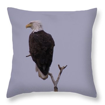 Solo  Bald Eagle Throw Pillow by Mary Mikawoz