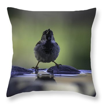 sparrow-BB-drip Throw Pillow