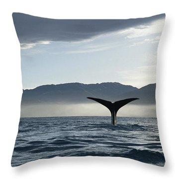 Sperm Whale Physeter Macrocephalus Throw Pillow by Flip Nicklin