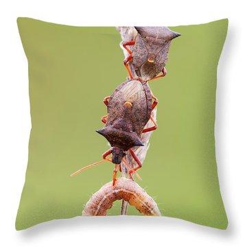 Predation Throw Pillows