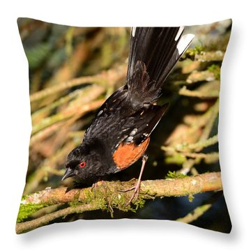 Spotted Towhee Throw Pillow by Kathy King